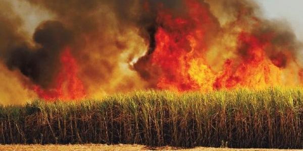 Resultado de imagem para palha queimando no fogo